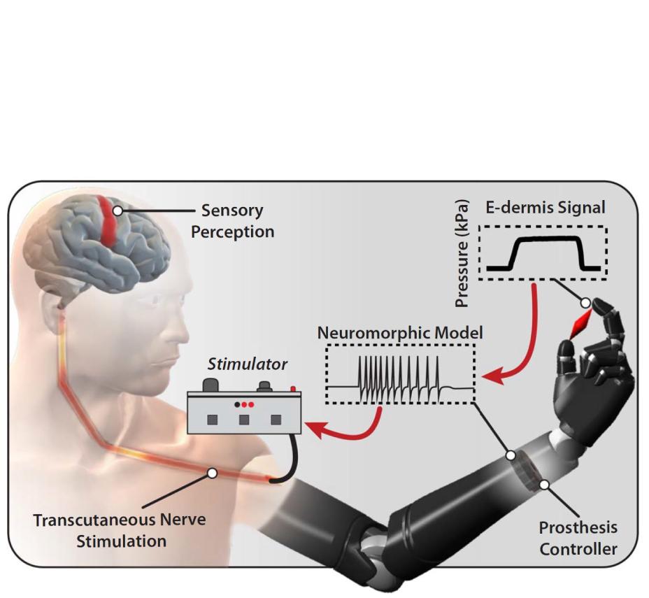 Neuromorphic Encoding